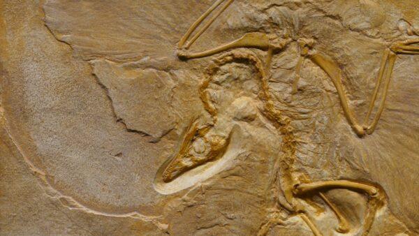 Jurassic Park e i limiti dell'uomo