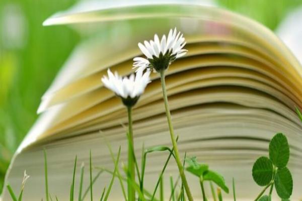 """""""Natura è ciò che vediamo"""" – la natura come fonte di ispirazione per Emily Dickinson"""
