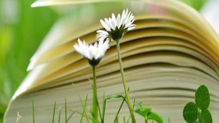 Natura: fonte di ispirazione per Emily Dickinson