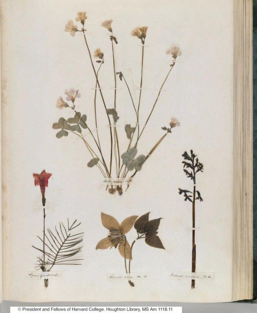 Nella letteratura e nella Natura: un legame profondo