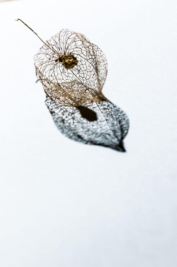 Poesia demone – Serpente, Simone Bonfiglio